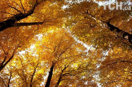 Золота осінь: Reuters показало яскраві фото теплих днів у США та Європі