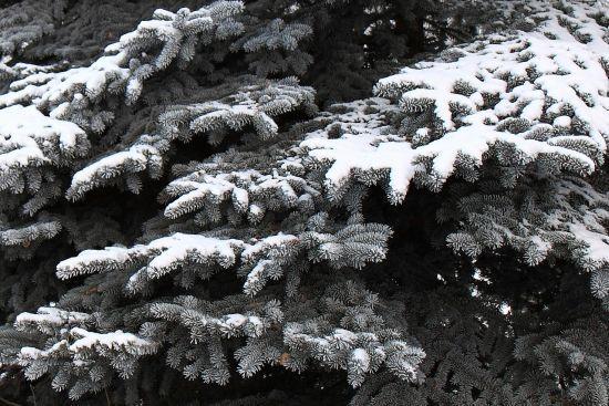 Пориви вітру й налипання мокрого снігу: синоптики попередили про негоду на заході України
