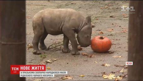 Редкое пополнение в пражском зоопарке. На свет появился малыш черного носорога