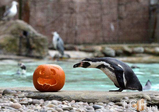 Для тварин у лондонському зоопарку влаштували геловінську вечерю