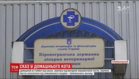 У Кропивницькому від сказу помер домашній кіт, який мешкав у приватному господарстві
