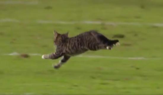 Кіт став зіркою телекамер під час футбольного матчу в США