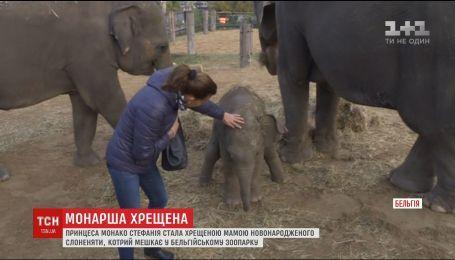 Принцеса Монако Стефанія стала хрещеною мамою слоненяти
