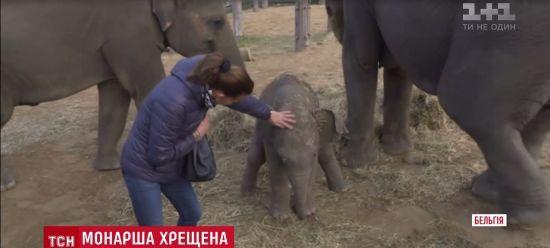 """Принцесса Монако стала """"крестной"""" для слоненка"""