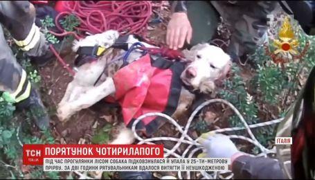 Итальянские спасатели вытащили собаку из 25-метровой ямы