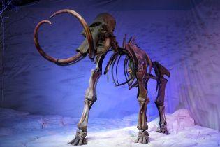 Під фундаментом дитячого садка у Бердянську знайшли рештки мамонта