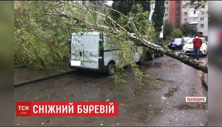 В результате сильного урагана в Прикарпатье на 8-летнего мальчика упало дерево