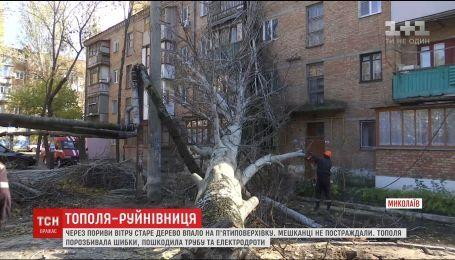 В Николаеве сильный ветрюган повалил дерево на пятиэтажку