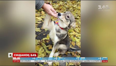 Столичні активісти розшукають собаку Боню