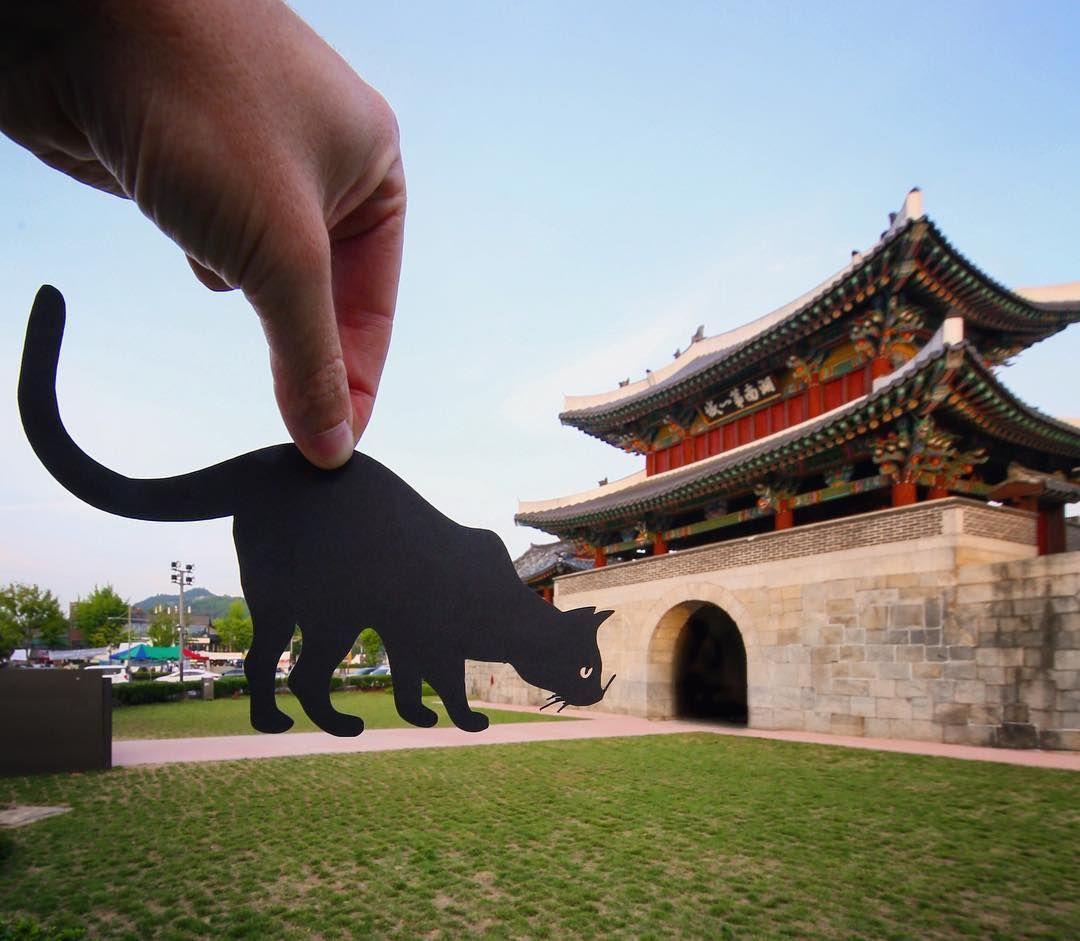Тревел-блог, кіт, Китай