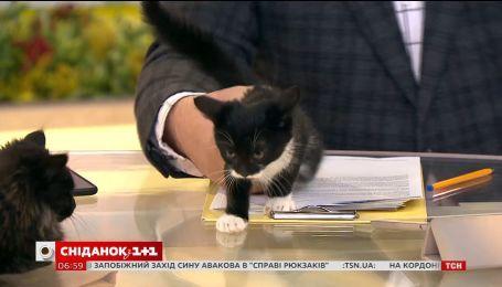 Двоє кошенят шукають родину