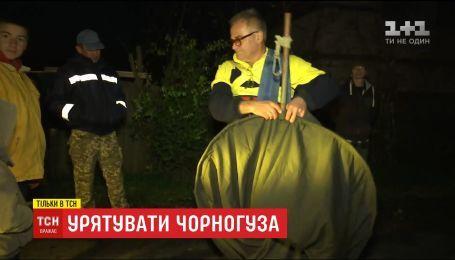 Жители села на Киевщине провели спецоперацию по спасению аиста, который не полетел в теплые края