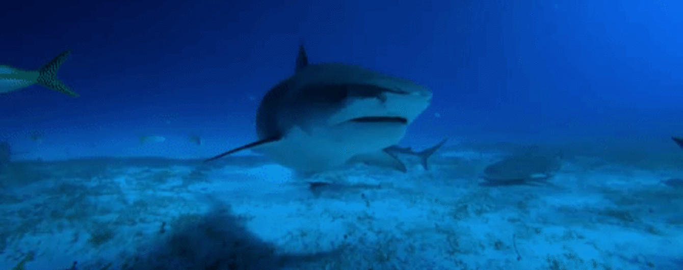 Невероятное видео GoPro со стаей акул и конфуз ведущей, которая обнажила ягодицы в эфире. Тренды Сети