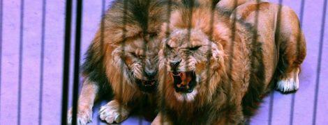 Цирки проти зоозахисників: в Україні поновилося протистояння щодо жорстокої експлуатації тварин