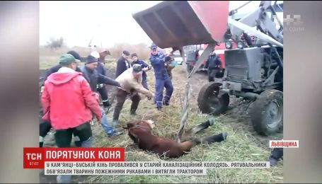 На Львовщине провели спецоперацию по спасению лошади, которая ногами провалилась в канализационный люк