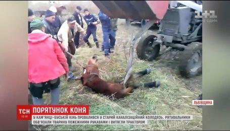 На Львовщине трактором вытягивали лошадь, провалившуюся в канализационный люк