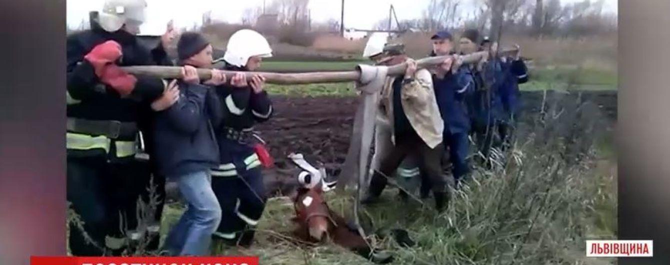 На Львівщині трактором та пожежними рукавами витягли коня з каналізаційного люку