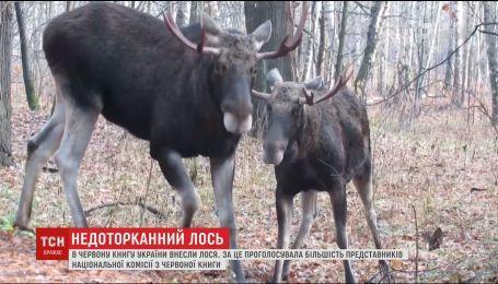 Комиссия НАН внесла лося в Красную книгу Украины