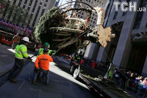 ВНью-Йорке установили 80-летнюю рождественскую ель