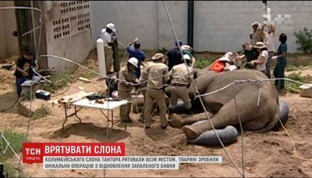 В Колумбии провели спецоперацию по восстановлению бивня 5-тонного слона