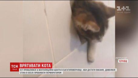 В Черновцах спасли кота из вентиляционной шахты