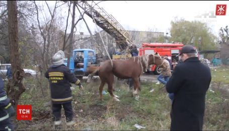 В Житомире спасли лошадь из канализационного люка