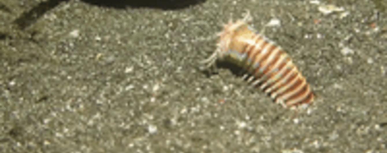Моторошний морський черв'як-чудовисько та конфуз Медведєва у В'єтнамі. Тренди Мережі