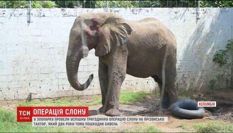 В зоопарке Колумбии провели успешную операцию слону