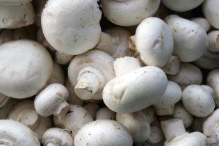 В Житомире 4-летняя девочка едва не умерла от грибов в детском саду
