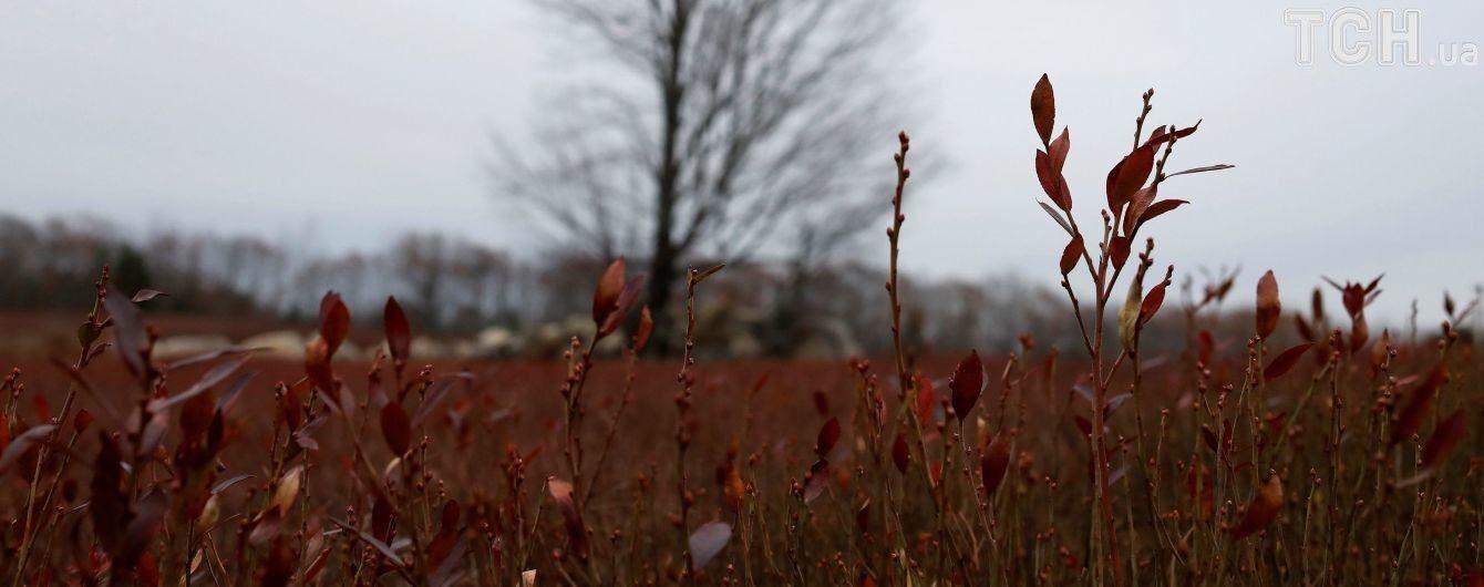 В Україні буде без опадів та холодно. Прогноз погоди на 15 листопада