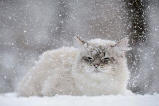 Репетиція зими. У неділю в Україні валитиме мокрий сніг з дощем