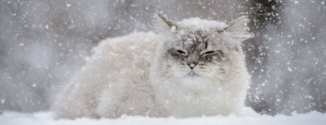 Репетиция зимы. В воскресенье в Украине будет валить мокрый снег с дождем