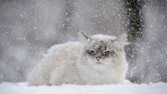 Якою буде погода взимку: кліматологи й народні синоптики дають кардинально різні прогнози
