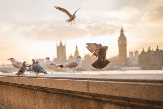 Квитки від 30 євро: Wizz Air почне літати наступного року зі Львова до Лондона