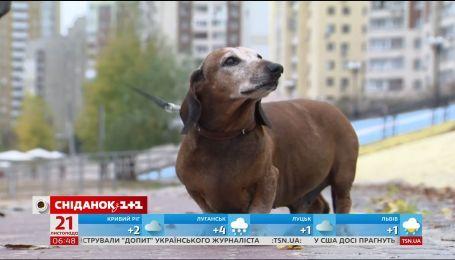 Собаки як ліки: доведено позитивний вплив чотирилапих друзів на здоров'я їхніх власників