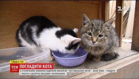 Столичний зоопарк шукає людей, які будуть гладити котів