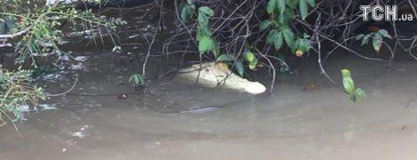 Уникального белого крокодила обнаружили в Австралии