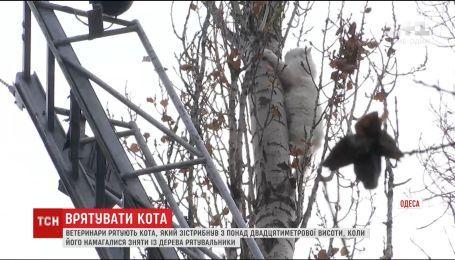 В Одессе более двух суток пытались снять с дерева кота