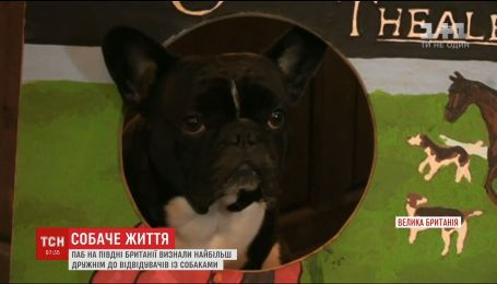 В Британии назвали самый дружественный в стране для собак паб