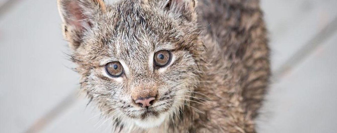 На українських дорогах з'являться спеціальні коридори для диких тварин