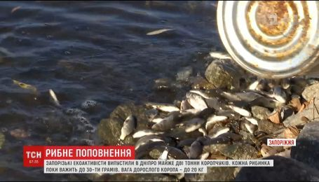 Почти две тонны рыбы выпустили в Днепр запорожские экоактивисты