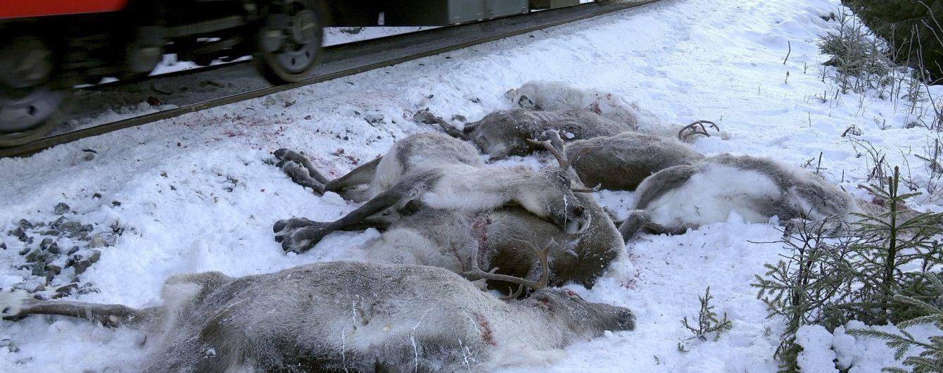 В Норвегии за четыре дня поезда сбили на смерть более сотни оленей