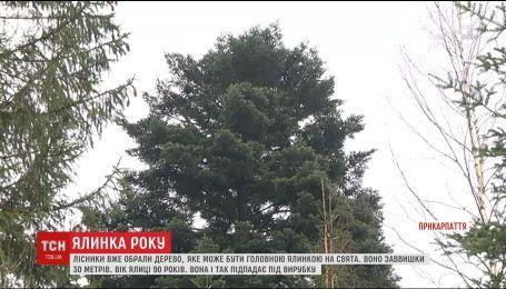 На Прикарпатье нашли 90-летнюю елку, которую могут поставить в столице на праздники
