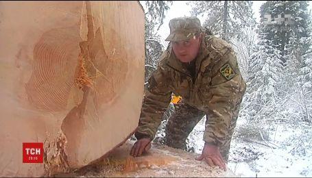 На Прикарпатье выбрали главную новогоднюю елку страны