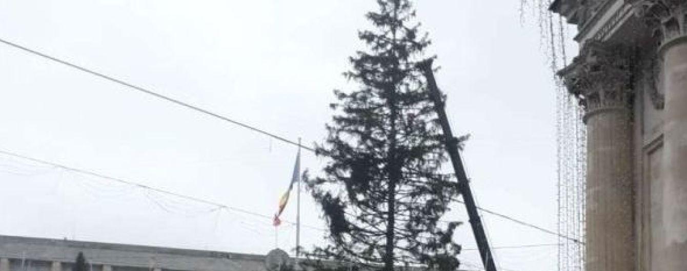 У Кишиневі облізлу новорічну ялинку замінили зрубаною в дитсадку