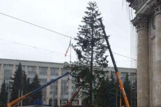 В Кишиневе облезлую новогоднюю елку заменили срубленной в детсаду