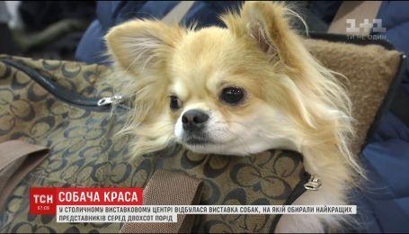В столице состоялся собачий конкурс красоты