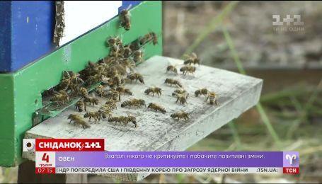 В Украине пересчитают всех пчел - экономические новости