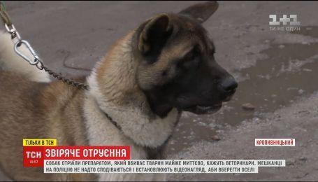 В Кропивницкому неизвестные за ночь отравили собак, которые охраняли дворы нескольких улиц