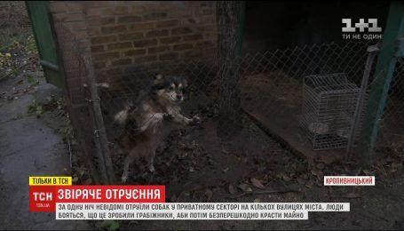 Жестокое отравления: в Кропивницкому жители нескольких улиц напуганные массовым убийством собак
